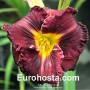 Hemerocallis Black Stockings - Eurohosta