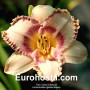 Hemerocallis Ageles Beauty - Eurohosta