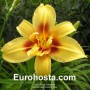 Hemerocallis Autumn Star - Eurohosta