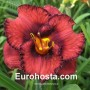 Hemerocallis Berrylicious - Eurohosta