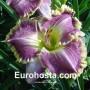 emerocallis Bestseller - Eurohosta