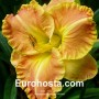 Hemerocallis Beyond Riches