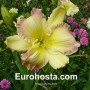 Hemerocallis Big Smile - Eurohosta