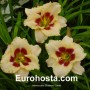 Hemerocallis Blueberry Candy - Eurohosta