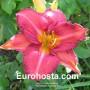 Hemerocallis Cajamamba - Eurohosta