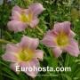 Hemerocallis Catherine Woodbery - Eurohosta