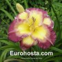 Hemerocallis Cheese and Wine - Eurohosta