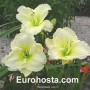 Hemerocallis Cool It - Eurohosta