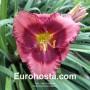 Hemerocallis Dan Mahony - Eurohosta
