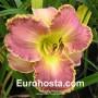Hemerocallis David Kirchhoff - Eurohosta