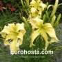 Hemerocallis Heavenly Flight of Angels - Eurohosta