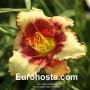 Hemerocallis Hello Screamer - Eurohosta