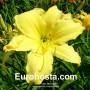 Hemerocallis Green Mystique - Eurohosta