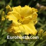 Hemerocallis Imperial Lemon - Eurohosta