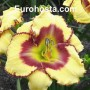 Hemerocallis Jamaican Me Crazy - Eurohosta