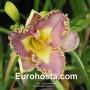 Hemerocallis Lavender TuTu - Eurohosta