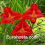 Hemerocallis Lusty Lealand - Eurohosta