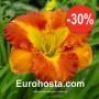 Hemerocallis Margaret Seawright - Eurohosta