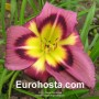 Hemerocallis Night Beacon - Eurohosta