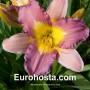 Hemerocallis Nile Crane - Hemerocallis