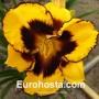 Hemerocallis Pumpkin Bandit - Eurohosta