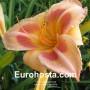Hemerocallis Real Wind - Eurohosta