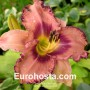 Hemerocallis Royal Braid - Eurohosta