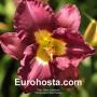 Hemerocallis Silent Sentry - Eurohosta