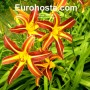 Breeders Choice Eurohosta