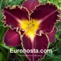 Hemerocallis Storm of the Century - Eurohosta