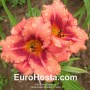 Hemerocallis Strawberry Candy - Eurohosta