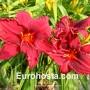 Hemerocallis Summer Wine - Eurohosta