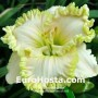 Hemerocallis Wonder of it All - Eurohosta