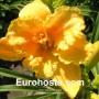 Hemerocallis Konstantina - Eurohosta