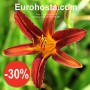 Hemerocallis Crimson Pirate - Eurohosta