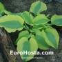 Hosta Goodness Gracious - Eurohosta