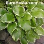 Hosta Color Festival - Eurohosta