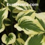 Hosta Silk Road - Eurohosta