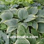 Hosta Alligator Shoes - Eurohosta