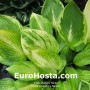 Hosta Collector's Banner
