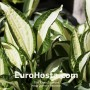 Hosta Diamond Necklace - Eurohosta