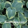 Hosta Earth Angel - Eurohosta