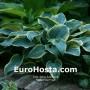 Hosta First Frost - Eurohosta