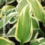 Hosta George M. Dallas