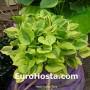 Hosta Grand Tiara - Eurohosta