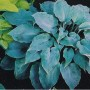 Hosta High Tide - Eurohosta