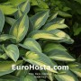 Hosta June - Eurohosta