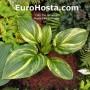 Hosta Kaleidochrome - Eurohosta