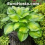 Hosta Lakeside Banana Bay - Eurohosta
