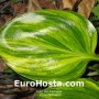 Hosta Oil Paint